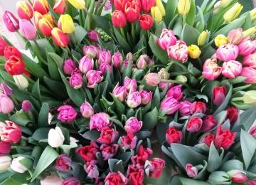 Roosiaia lillepood taas avatud